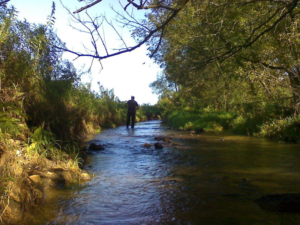 Little willow creek seeking trout for Willow creek fishing