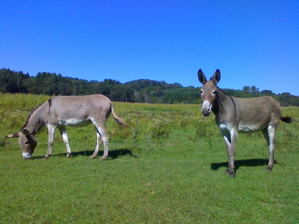 Willow River Donkeys