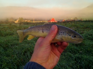 Coon Creek Brown Trout