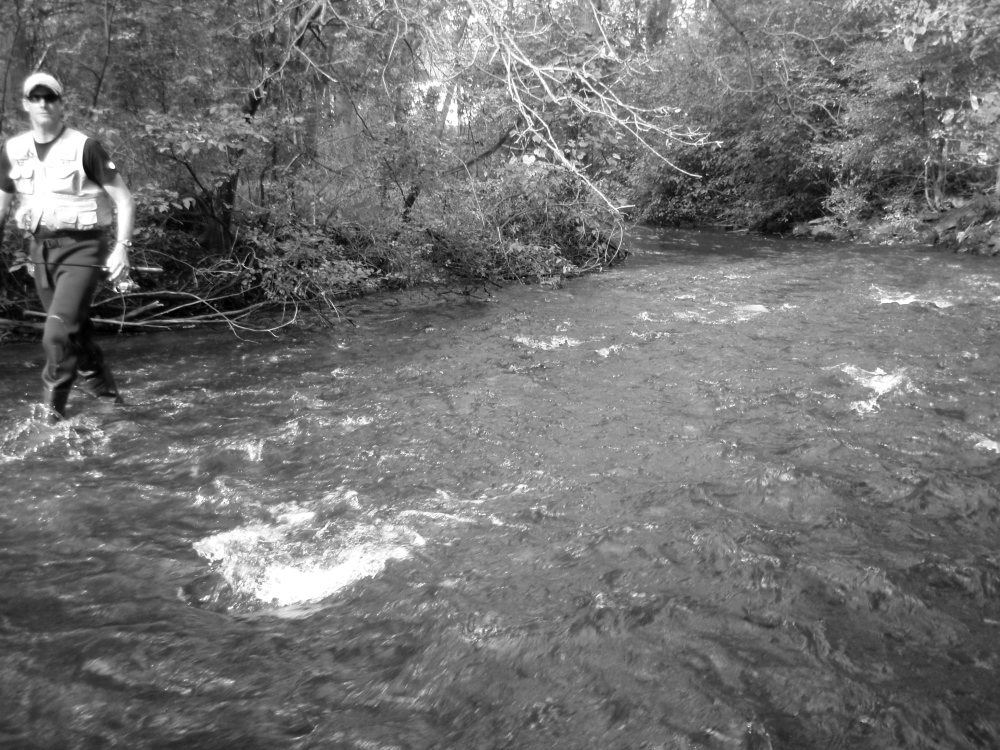 Lodi Spring Creek