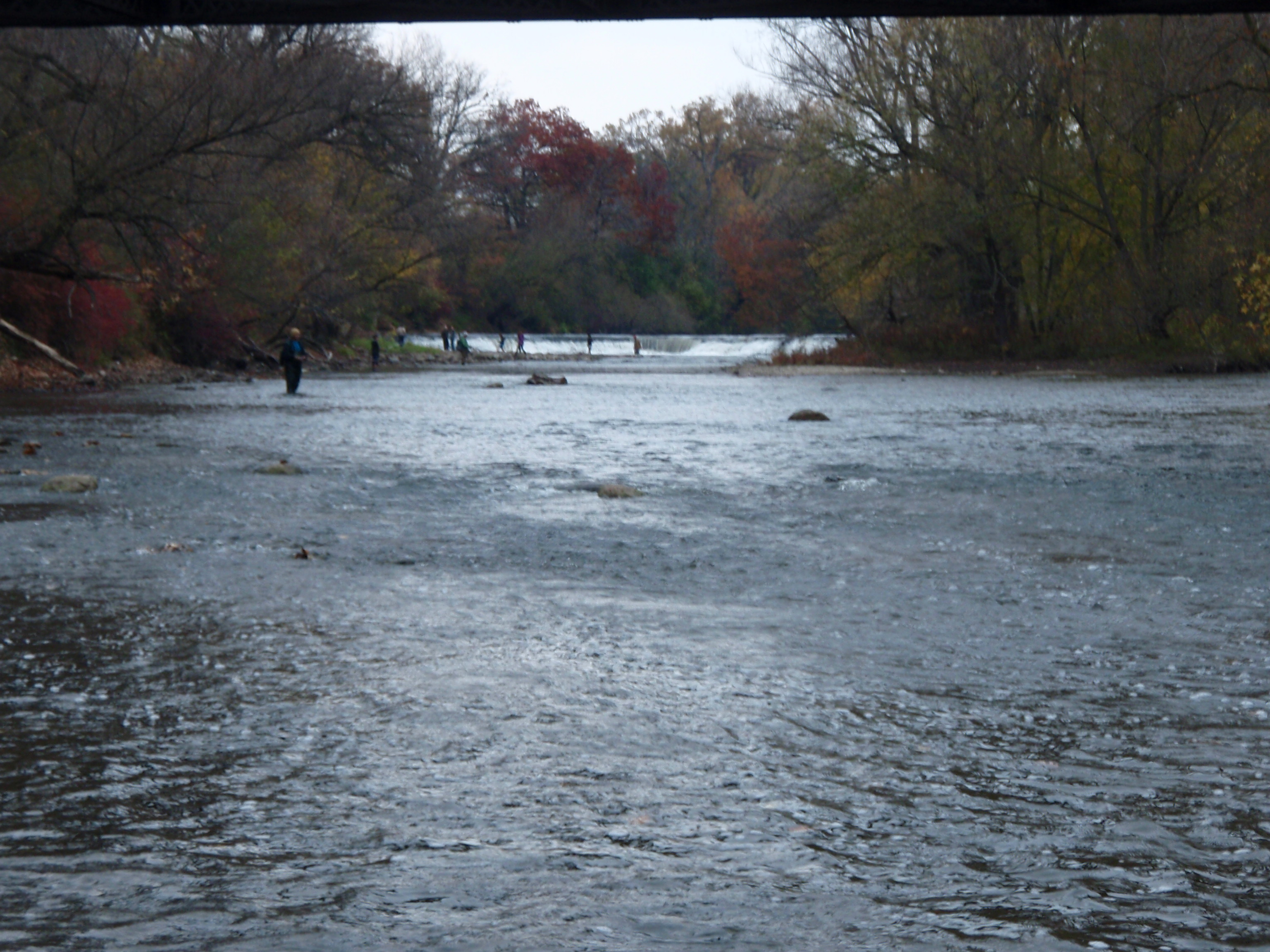 Milwaukee river salmon seeking trout for Milwaukee river fishing report