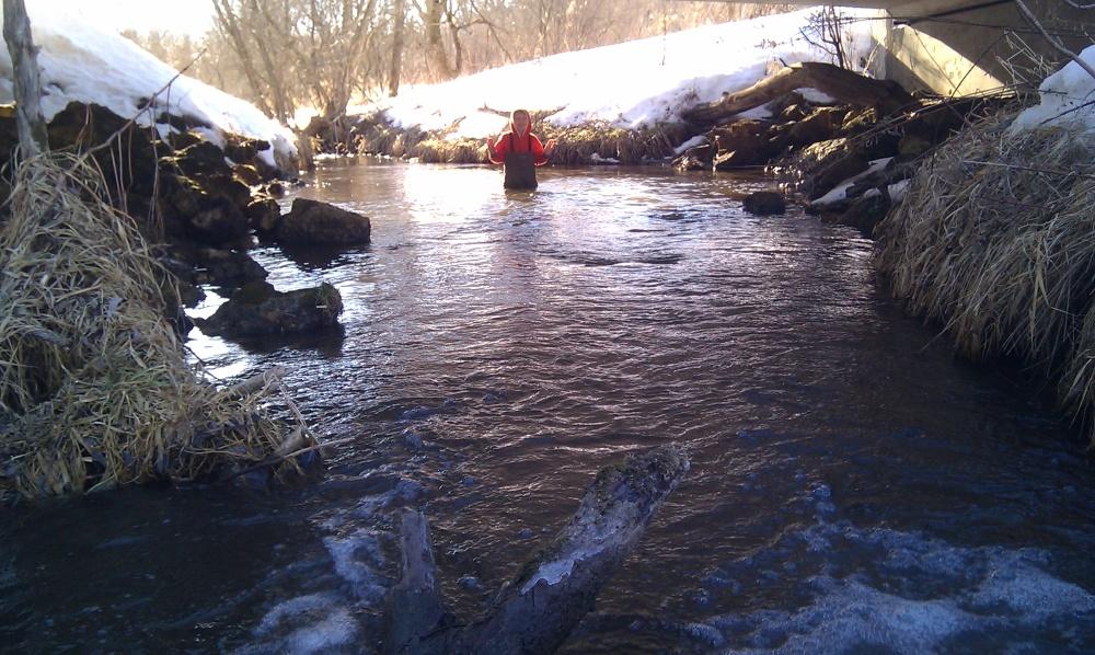 Bode wading Gordon Creek