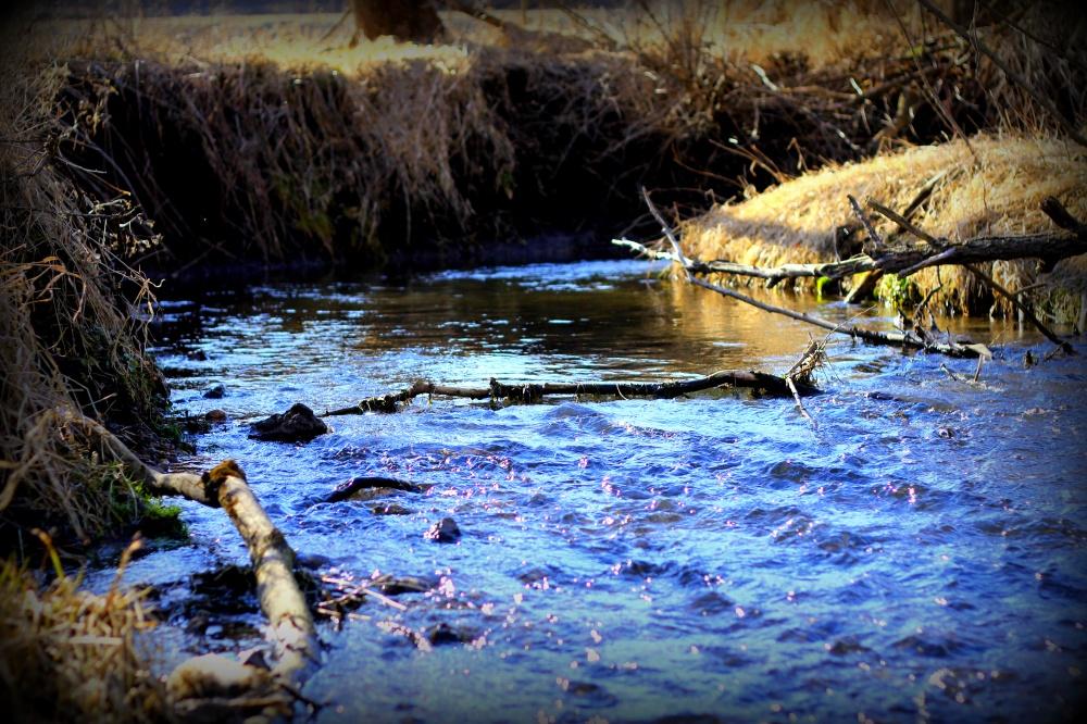 Gordon Creek Headwaters