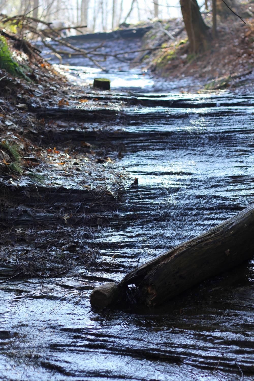 A Driftless spring seep running down limestone