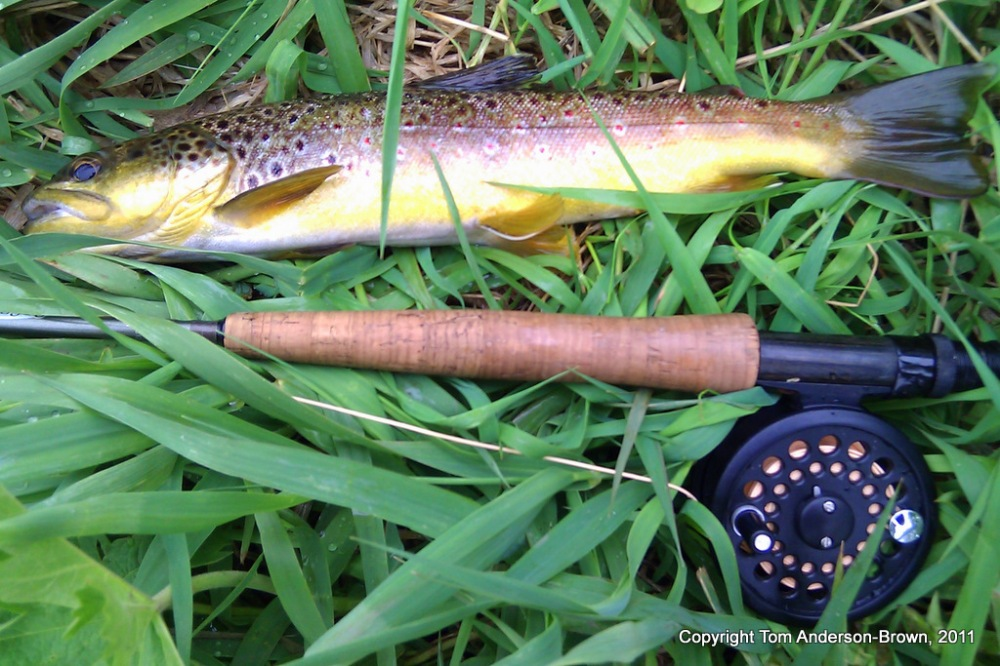 Black Earth Creek Brown Trout, 13 May, 2011