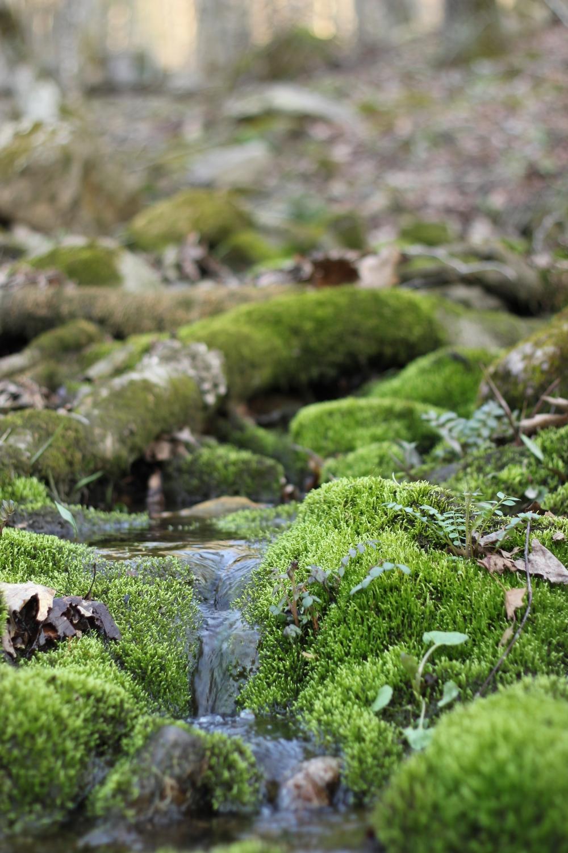 Spring Water, Baraboo Hills, Wisconsin