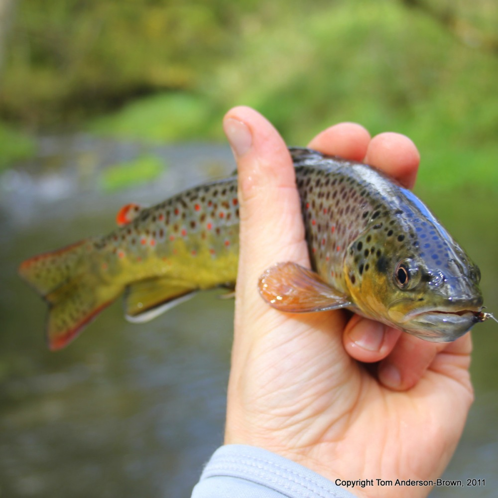 Hormonal Fish, Correct Fly, Stealthy Approach all lead to a beautiful hookup