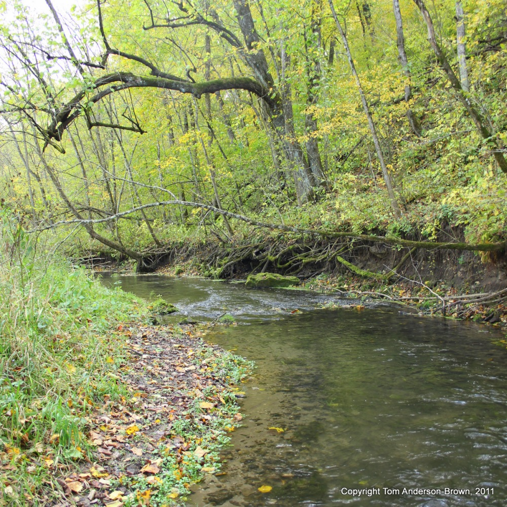 A Crawford County Spring-Fed Trout Stream
