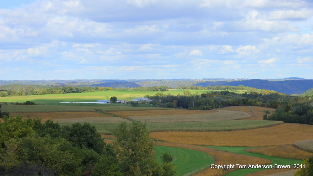 Soybeans and Corn ready to harvest, Crawford County, Wisconsin