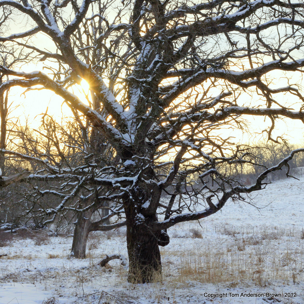 Sunrise, Oak Tree, Iowa County, Wisconsin