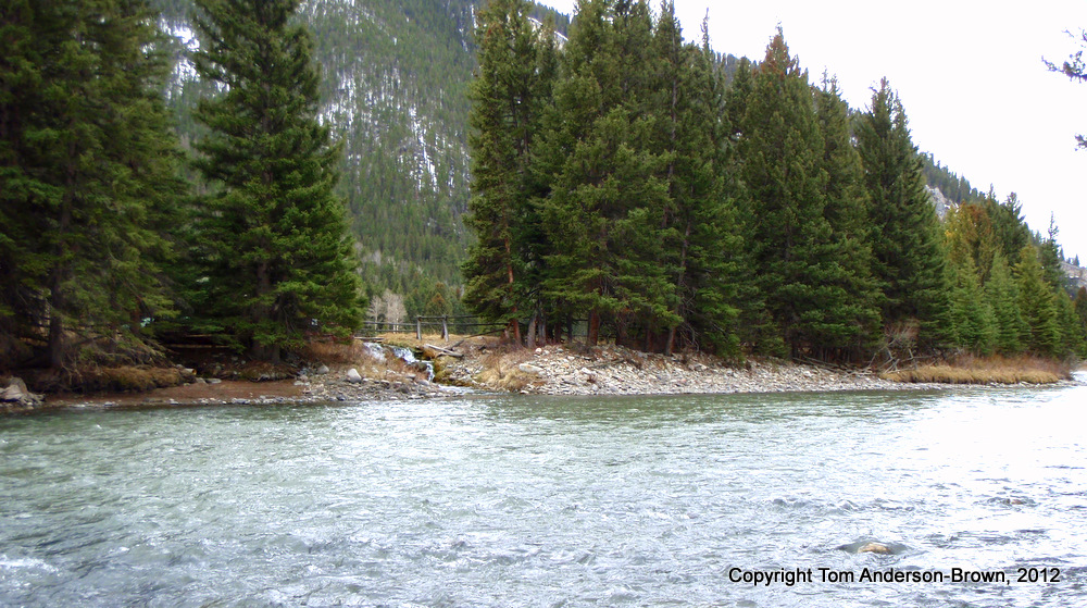 A pretty feeder creek on the Gallatin River, Montana