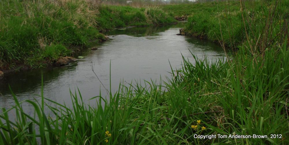 Kittleson Creek, Dane County, Wisconsin