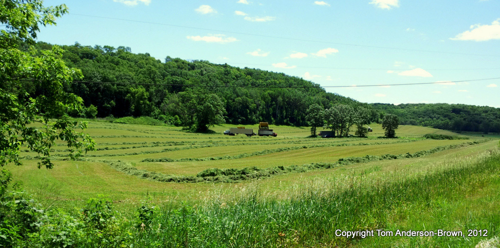 The Season's First Hay Crop, Dane County Driftless Region, Wisconsin