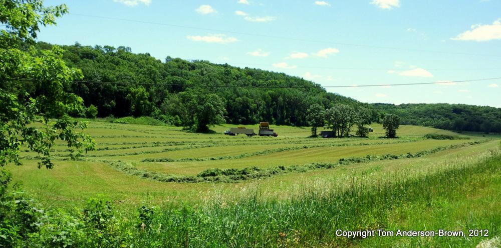 The Season's First Hay Crop, Dane County Driftless Region, Wisconsin
