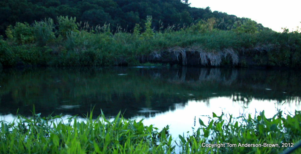 Tiny Riseforms on Black Earth Creek
