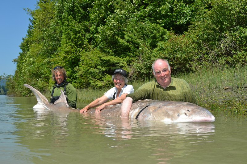 Michael Snell with a record White Sturgeon on the Fraser River, BC, Canada