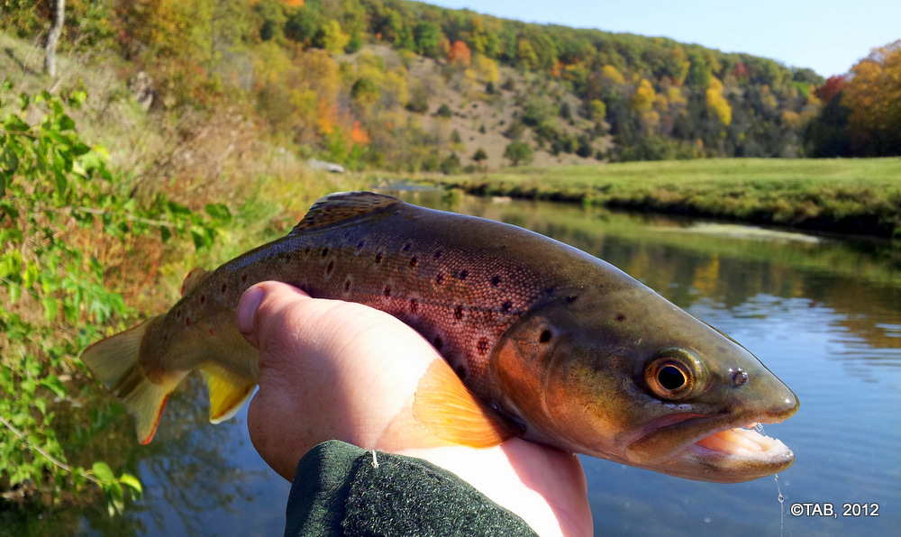 Best Trout of the Day