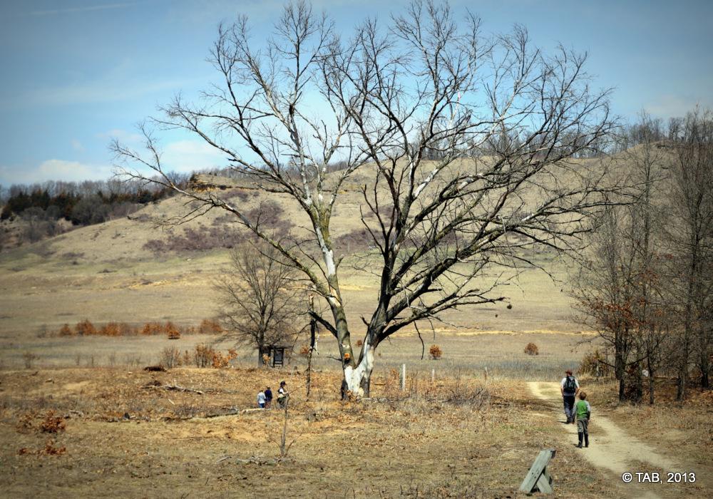 Spring Green Prairie