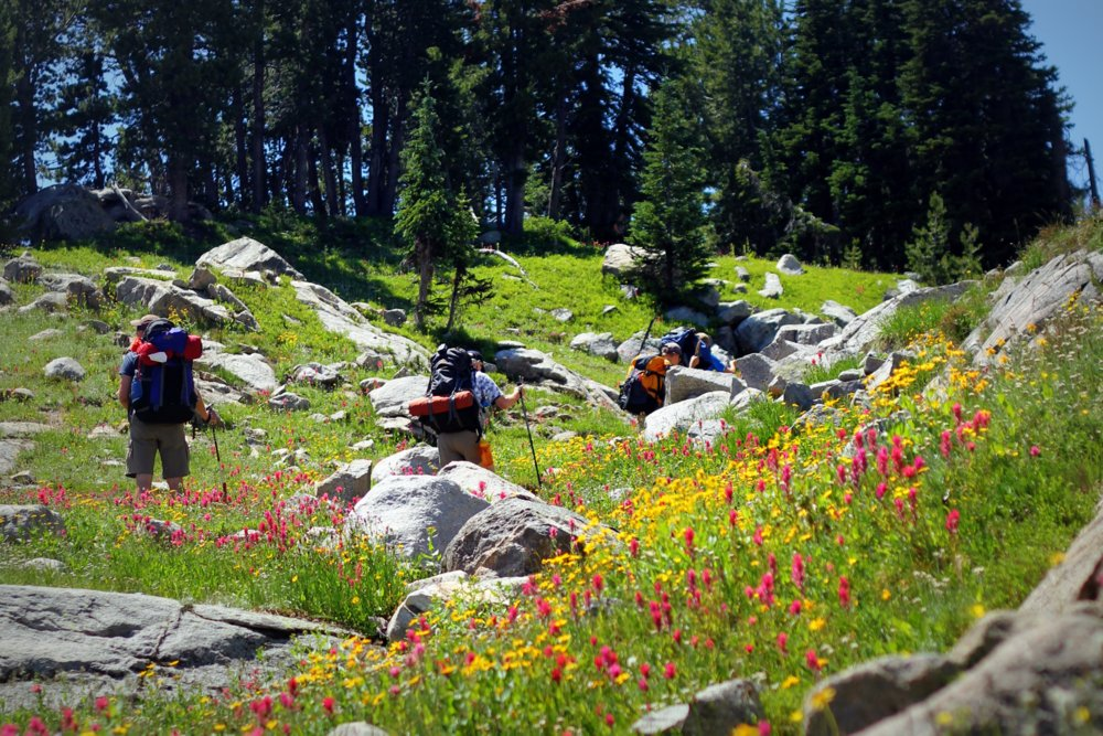 Amazing alpine wildflowers on the East Rosebud Trail