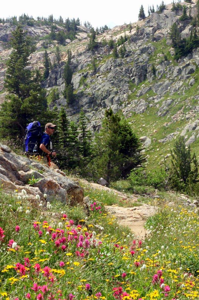 Stephen amongst wildflowers, East Rosebud Trail