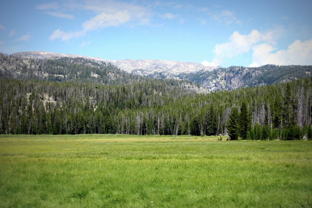 A meadow above the Clarks Fork River, East Rosebud Trail