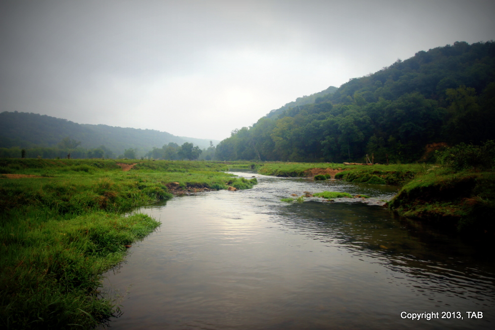 A glorious spring-fed creek in WIsconsin's Driftless Region