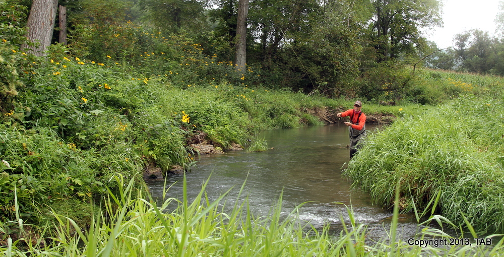 Stephen Rose casting to a lie on a Kickapoo tributary